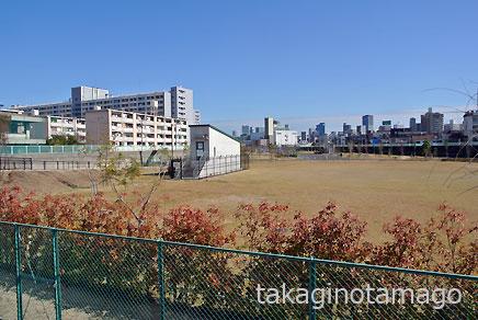 正蓮寺川の跡に整備された公園