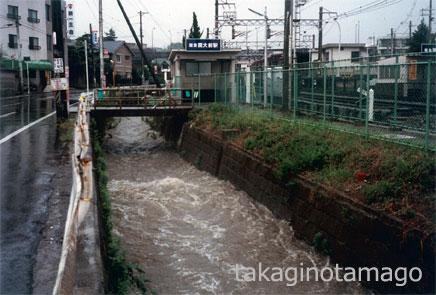 降雨直後の上の川の流れ