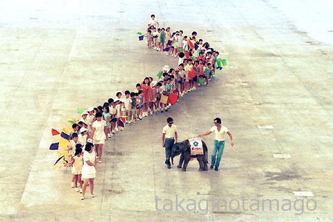 お祭り広場 子象と子どものアトラクション