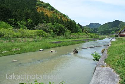 大木津の流れ橋【小出水】